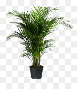 Potted Plant Png Amp Potted Plant Transparent Clipart Free