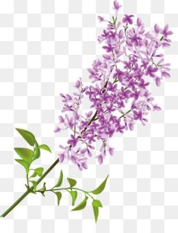 free download common lilac flower clip art lilac flower png rh kisspng com lilac borders clip art lilac clip art flowers