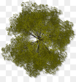 Tree Plan Clip Art