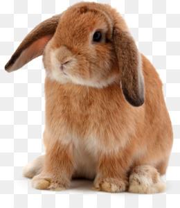 Free download Lionhead rabbit Djungarian hamster Roborovski