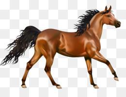 Free Download Arabian Horse American Paint Horse American Quarter