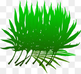 palm sunday png and psd free download arecaceae palm branch palm rh kisspng com