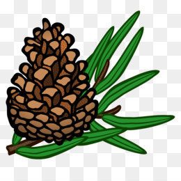 conifer cone pine clip art pine cone png download 2400 2250 rh kisspng com pine cone clipart black and white pine cone graphic clipart