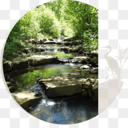 Stream Restoration, Water Resources, Stream, Creek PNG image with transparent background