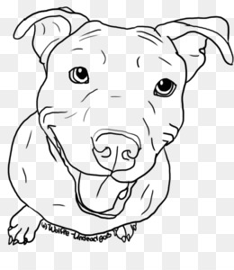 How To Draw A Pitbull Head Step By Step
