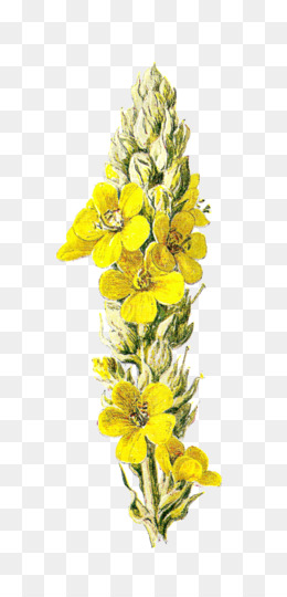 Free download wildflower yellow clip art yellow flowers png wildflower yellow clip art yellow flowers mightylinksfo