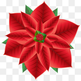 Poinsettia christmas decoration flower clip art paper firework png poinsettia christmas decoration flower clip art paper firework png download 600597 free transparent art paper png download mightylinksfo