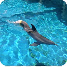 Clearwater Marine Aquarium PNG - clearwater-marine-aquarium-winter on