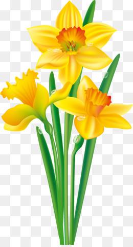 daffodil png daffodil transparent clipart free download drawing rh kisspng com daffodil clip art free download daffodil clip art free