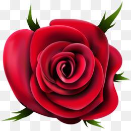 d11647261e679 Free download Rose Desktop Wallpaper Clip art - rose png.