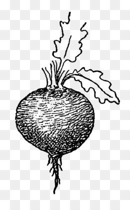 Free Download Drawing Beetroot Tuber Parsnip Vegetable Png