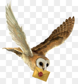 harry potter and the philosopher s stone owl harry potter and the