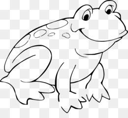 American Bullfrog Coloring Book Amphibian Child Image Of Frog 800