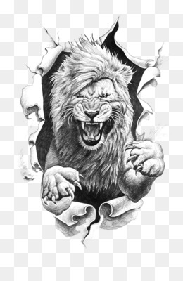Lion Drawing Png Cartoon Lion Drawings Realistic Lion Drawings