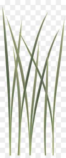 Free download Grass Leaf Texture png