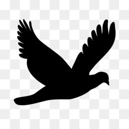 Colomba Uccello Png Trasparente E Colomba Uccello Disegno