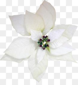 Arabian jasmine flower cape jasmine three jasmine png download png mightylinksfo