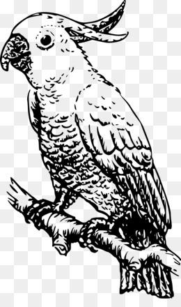 Mewarnai Burung Png Gambar Unduh Mewarnai Burung Gambar Transparan