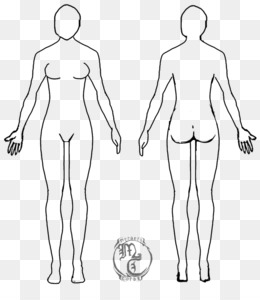 Free download Female body shape Human body Diagram Drawing Woman ...