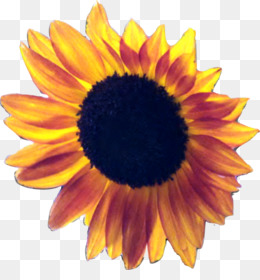 Common Sunflower Clip Art