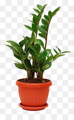 Houseplant, Plant, Succulent Plant, Leaf PNG image with transparent background