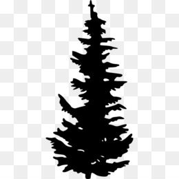 evergreen tree pine clip art pine vector png download 640 640 rh kisspng com evergreen tree clipart black and white