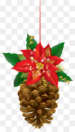 Poinsettia, Conifer Cone, Christmas, Evergreen, Pine Family PNG image with transparent background