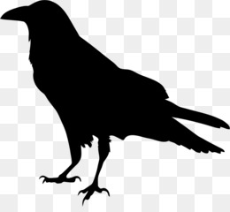 raven png and psd free download common raven clip art raven rh kisspng com