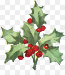 png - Christmas Holly Decorations