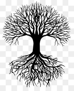 Drawing Root Tree Sketch Tree Of Life Png Download