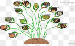 an analysis of carnivorous plants in botany American journal of botany abstracts for research papers about nepenthes • structure and development of the pitchers from the carnivorous plant nepenthes alata.