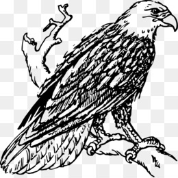 Bald Eagle, Line Art, Drawing, Art, Monochrome Photography PNG image with transparent background