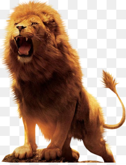 Lion Of Judah Png The Lion Of Judah Movie Canvas Painting Lion Of