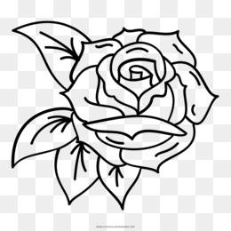 acc5301709 Free download Floral design Drawing Rose Pink Vans - rose png.
