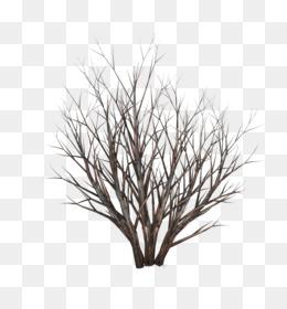 árbol Sin Hojas Png Transparente Y árbol Sin Hojas Dibujo Logotipo