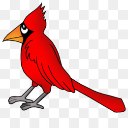 free download northern cardinal bird drawing clip art free rh kisspng com stl cardinals clipart free cardinals baseball clipart free download
