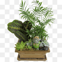 Houseplant, Flowerpot, Bulda, Plant PNG image with transparent background