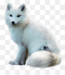 Arctic Fox, Arctic, Arctic Wolf, Wildlife PNG image with transparent background
