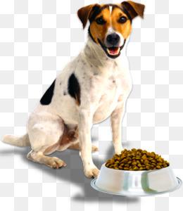 Treeing Walker Coonhound PNG - treeing-walker-coonhound