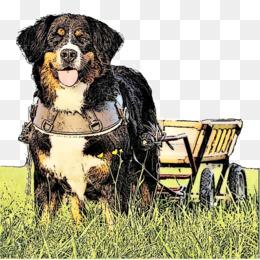 Free Download Dog Breed Bernese Mountain Dog Entlebucher