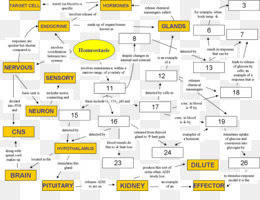 Free Download Homeostasis Concept Map Biology Mind Map Physiology