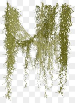 Free Download Spanish Moss Clip Art Liane Rossler Png