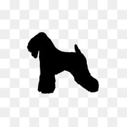 Free Miniature Schnauzer Puppy