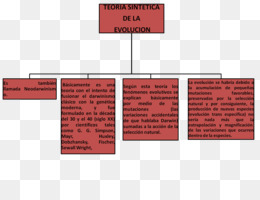 Concept Map About Evolution.Free Download Introduction To Evolution Concept Map Biology Map Png