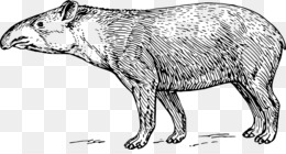 Zoologia Png Trasparente E Zoologia Disegno Il Tapiro Malese