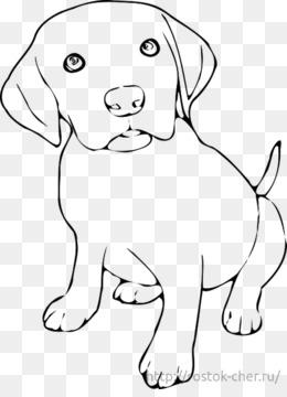 ücretsiz Indirin Labrador Retriever Yavrusu Golden Retriever Yavru