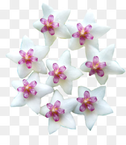 Free download moth orchids cut flowers pink m petal rtv pink wax moth orchids cut flowers pink m petal rtv pink wax flower mightylinksfo