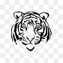 Free Download White Tiger Drawing Sketch Tiger Png