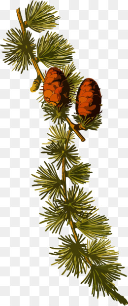 Botany, Plant, Medicinal Plants, Tree, Christmas Ornament PNG image with transparent background