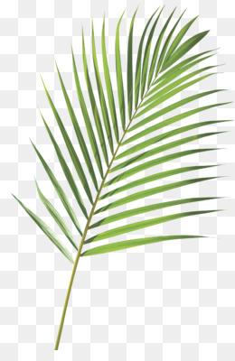 Palm Sunday PNG - Jesus Palm Sunday, Palm Sunday Scripture